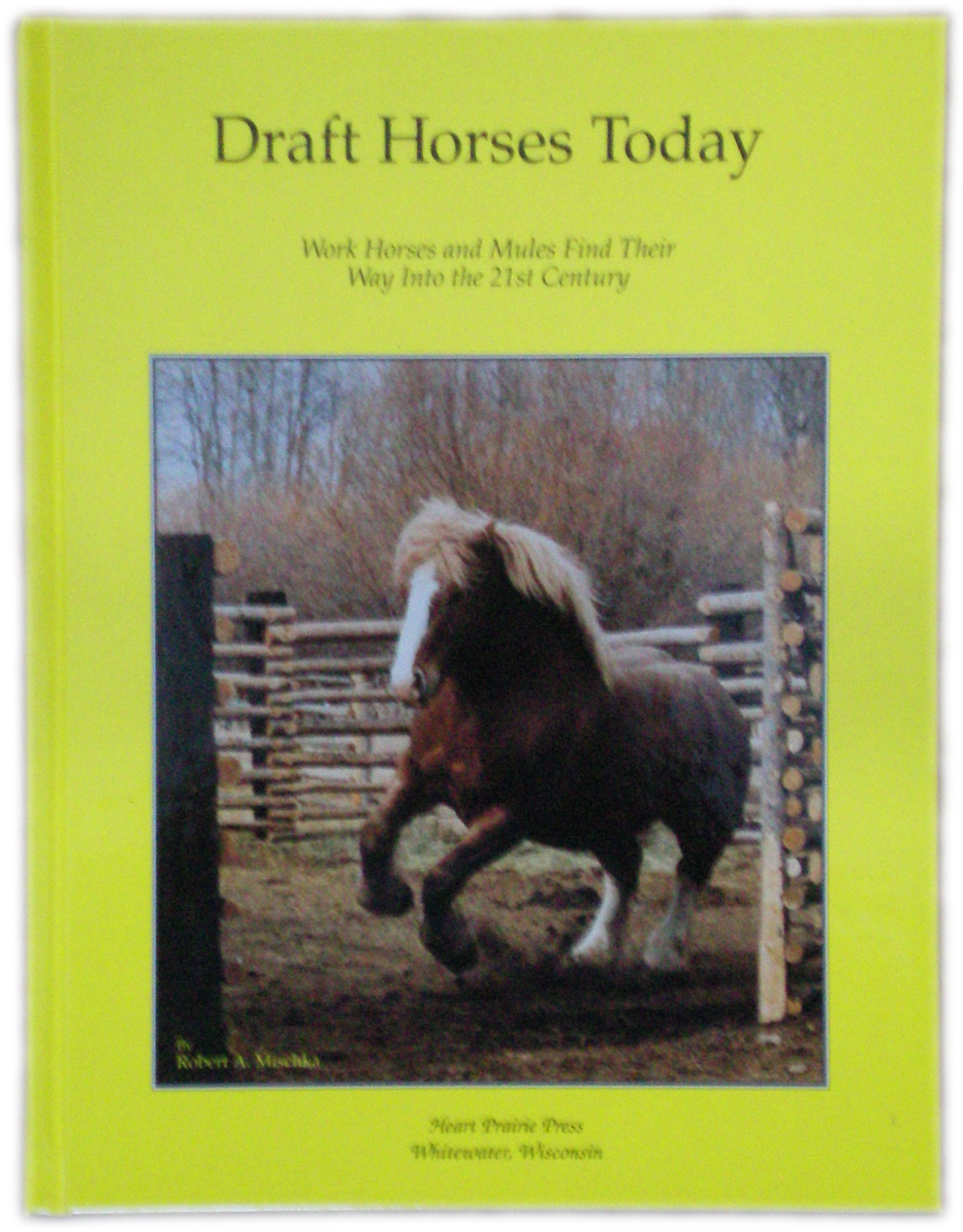Draft Horses Today