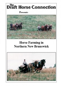 Horse Farming In Northern New Brunswick
