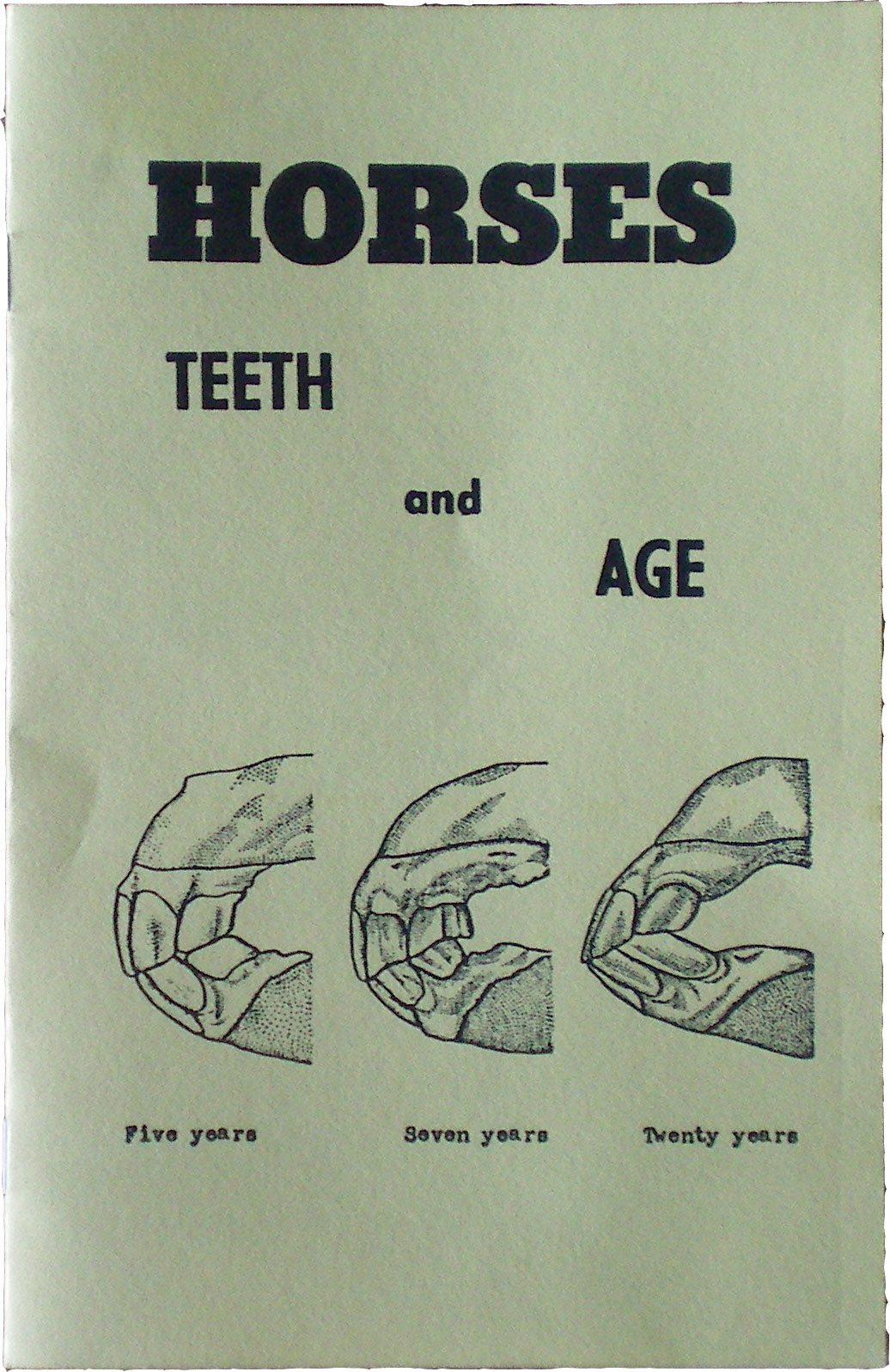Horses Teeth And Age